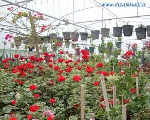 طرح توجیهیدانلود طرح توجیهیدانلود طرح کسب و کاردانلود طرح کارآفرینیدانلود طرح توجیهی پرورش گلگل و گیاهدانلود طرح کارآفرینی گل و گیاه