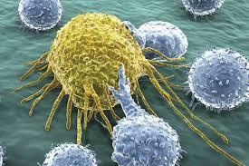 پاورپوینت ایمونولوژی سرطان ایمونولوژی سرطان نظریه مراقبت ایمونولوژیک  ایمونولوژی تومور  ویژگیهای عمومی ایمنی در برابر تومور تقسیم بندی کلاسیک آنتی ژنهای توموری آنتی ژنهای توموری آنتی ژنهای انکوفتال آنتی ژنهای گلیکولیپیدی و گلیکوپروتئینی تغییر یافته لنفوسیتهای T چگونگی کشته شدن سلولهای توموری توسط CTL ایمونوتراپی سرطان