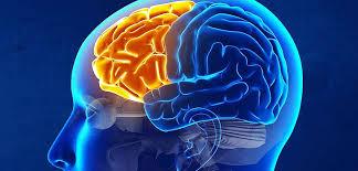 آناتومی فیزیولوژیک قشر مغز بصورت پاپورپوینت در قالب 28 اسلاید تشریح فیزیولوژیک قشر مغز قشـر حرکتی مراکز حسی بویایی چشایی بینایی آناتومی قشر مغر آناتومی انسان