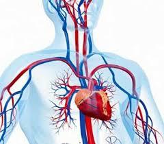 Blood Pressure فشار خون گردش خون انسان بیماری فشارخون